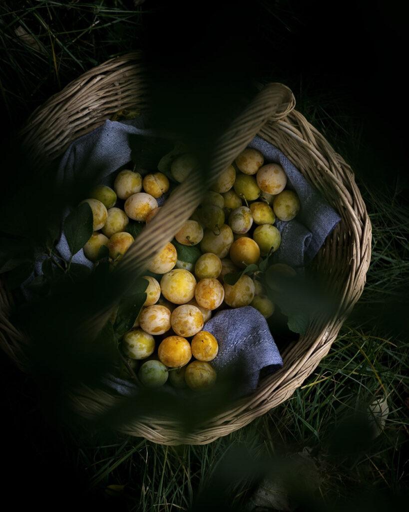 Frisch vom Baum gepflückt direkt ins Körbchen: Aus diesen Mirabellen wird ein leckerer Kuchen
